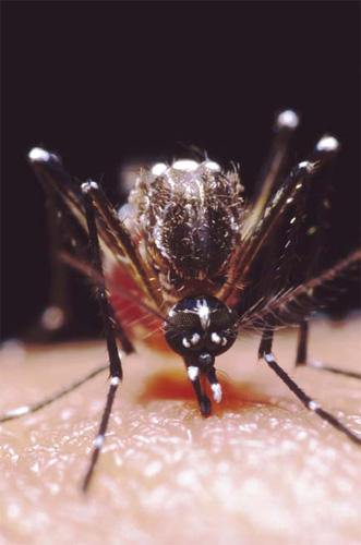 болезни вызываемые комарами