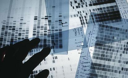 Слайды результатов ДНК-теста.